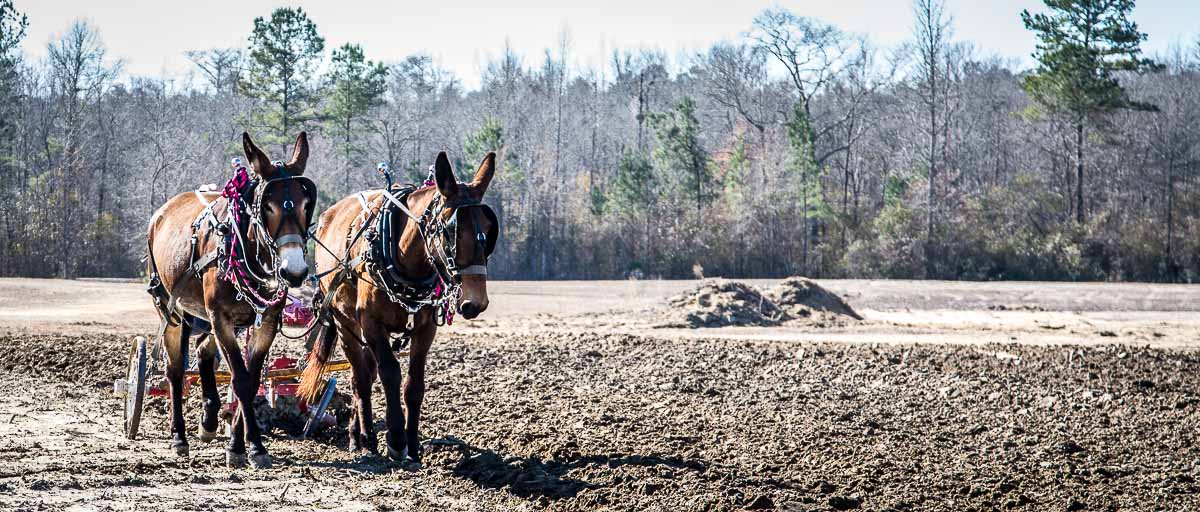 Plow Days, Stockton, AL
