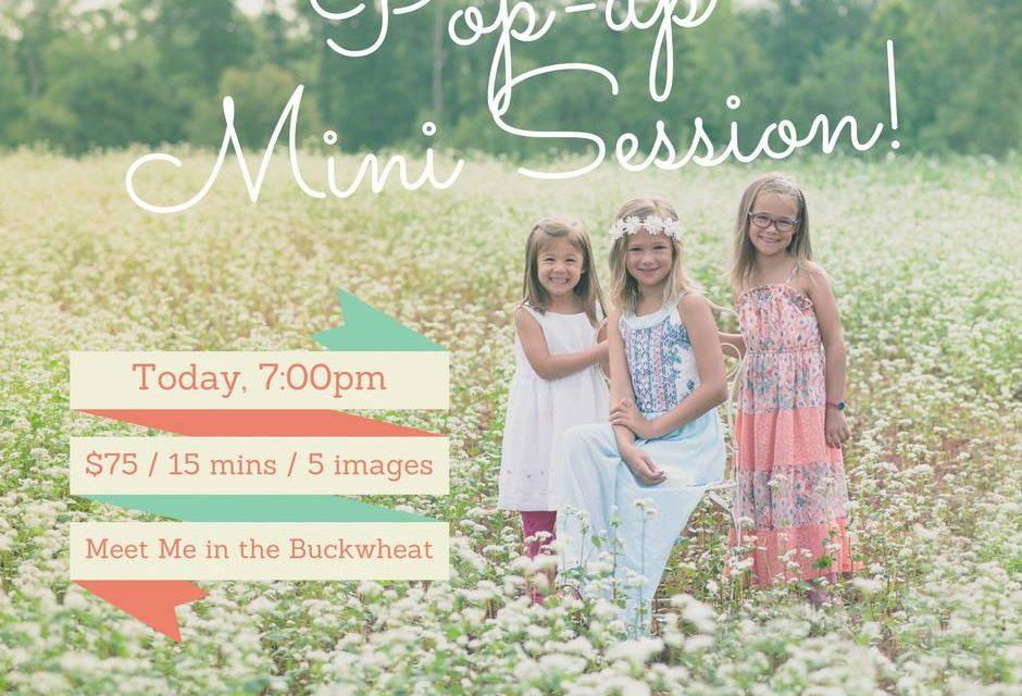 Summer Buckwheat